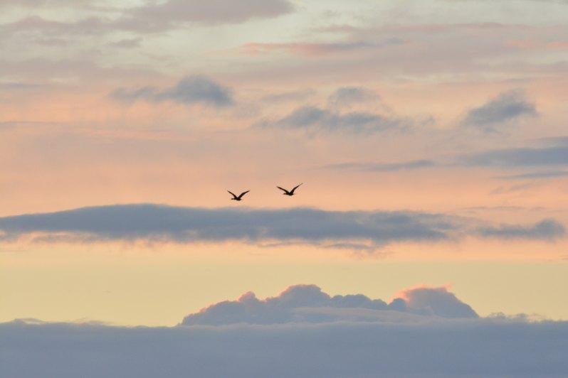 Bye Geese